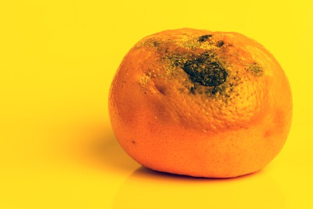 Spoiled Citrus Fruit is on a yellow background. Mold on a ripe orange mandarin. Copy space. Close-up. Stock Photo