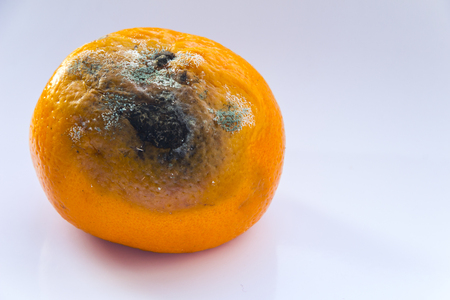 Citrus Fruit is rotten. Spoiled mandarin with a mold on a white background. Copy space. Close-up. Stock Photo
