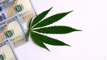 The concept of the sale and purchase of marijuana, the legalization of drugs or drug trafficking. Green canapis leaf next to three hundred US dollars on a white background. Copy space.