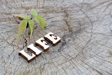 The word LIFE is composed of wooden letters on an old stump beside a young green sprout. The concept of nature protection and ecology. Copy space for design.