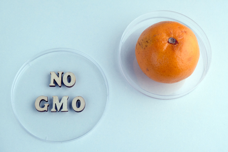 No GMO. Two Petri dishes phrase made from wooden letters and tangerine. Concept of medical research or laboratory experiments with citrus. Ecology, life, health and nutrition. Blue background.