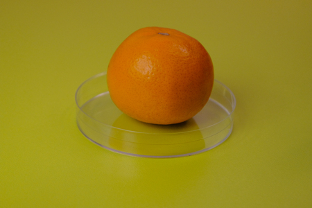 Ripe tangerine on a petri dish close-up. Green background. The concept of laboratory work with genetically modified products. Without GMO.