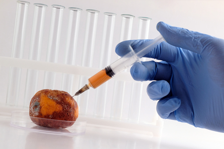 A hand in a blue medical glove stuck a syringe with an orange liquid into a spoiled tangerine. Laboratory tubes on the background. Bioengineering concept, GMO analysis, citrus treatment.