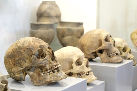 Several old human skulls on gray supports. Pottery ancient dishes in the background. Stocking for the celebration of the night in the museum, Halloween or All Saints Day.