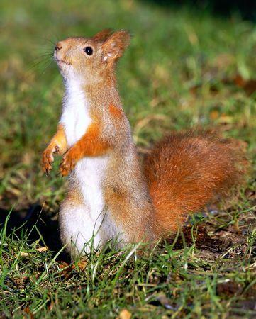 squirrel Фото со стока