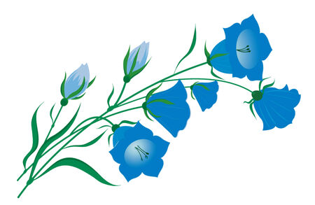 Vector image of a bellflower Illustration