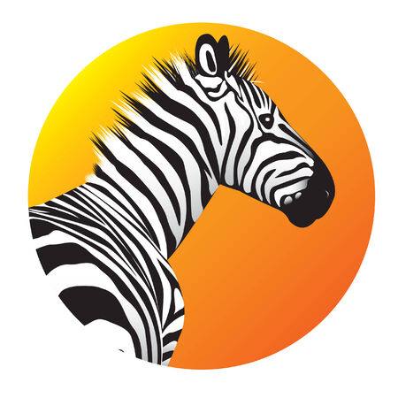 sripes: Zebra. illustration for you design Illustration