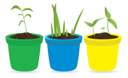 Potted seedling. Vector illustration