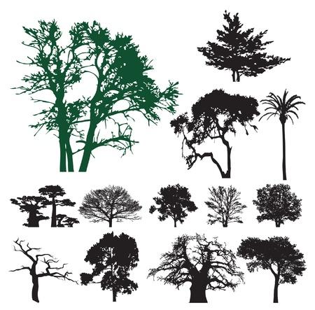 arboles blanco y negro: �rbol de silueta colecci�n. Ilustraci�n vectorial