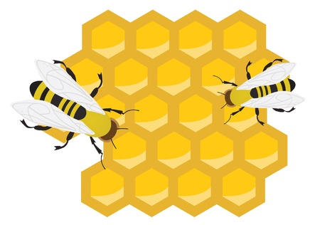 mead: Honeycomb and bees. Vector illustration