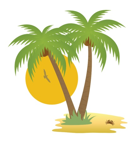 coconut tree: Tropical island