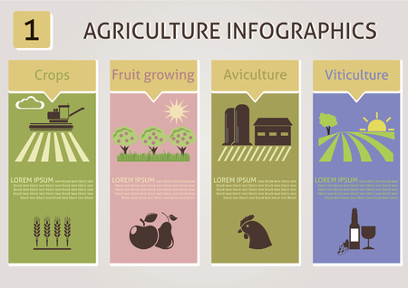 grape seed: Agriculture infographics  Vector for you design Illustration