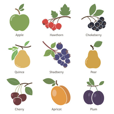 hawthorn: Fruits and berries. Set. Vector for your design