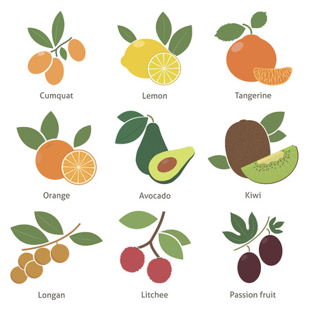 longan: Fruits and berries. Set. Vector for your design