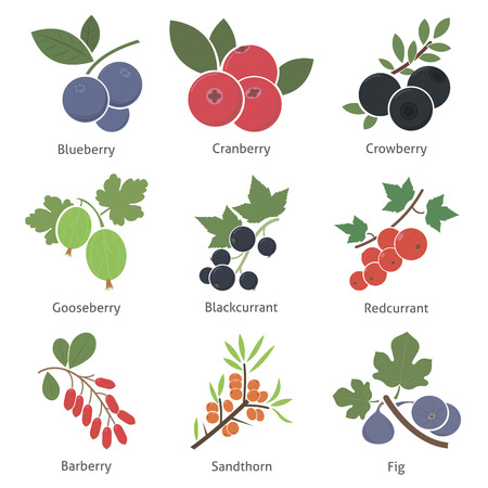 fig leaf: Fruits and berries. Set. Vector for your design
