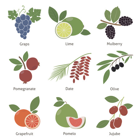 jujube fruits: Fruits and berries. Set. Vector for your design