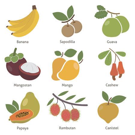 rambutan: Fruits and berries. Set. Vector for your design