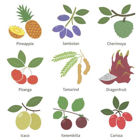 tamarindo: Frutas y bayas. Set. Vector para su diseño