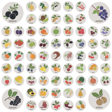 pomelo: Fruits and berries. A large set of icons
