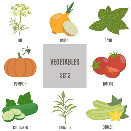 tarragon: Vegetables. A set of icons in flat style. 8 varieties of vegetables in set 3