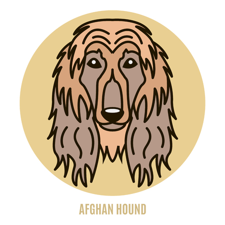 Portrait of Afghan Hound. Vector illustration in style of flat Vettoriali
