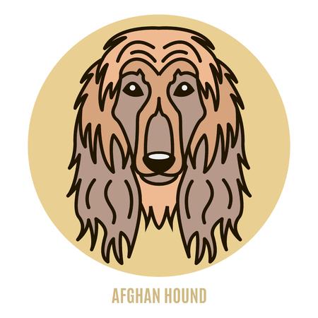 Portrait of Afghan Hound. Vector illustration in style of flat Illustration
