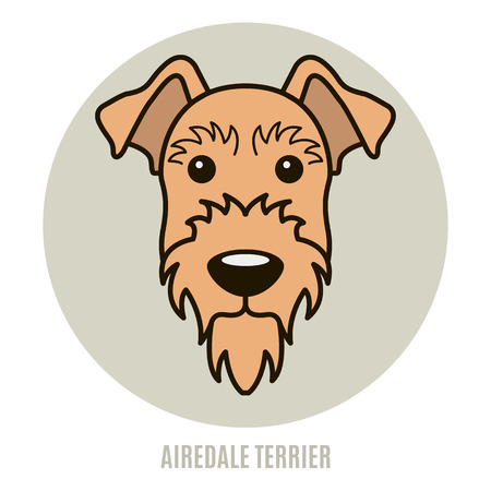 Portrait of Airedale Terrier. Vector illustration in style of flat