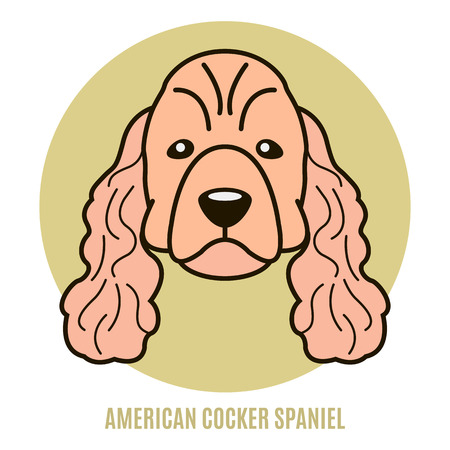 Portrait of American Cocker Spaniel. Vector illustration in style of flat
