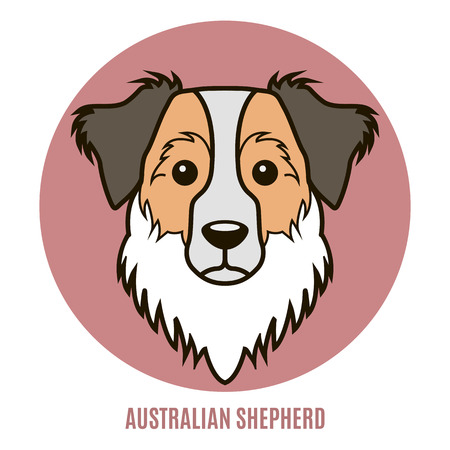 Portrait of Australian Shepherd. Vector illustration in style of flat Ilustração