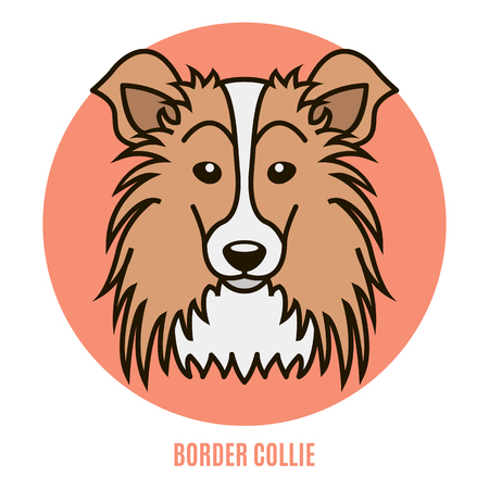 Portrait of Border Collie. Vector illustration in style of flat