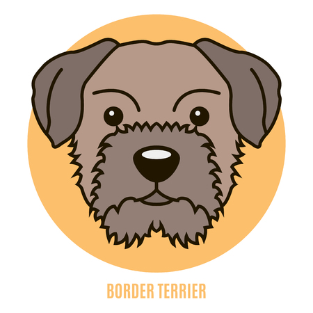 Portrait of Border Terrier. Vector illustration in style of flat