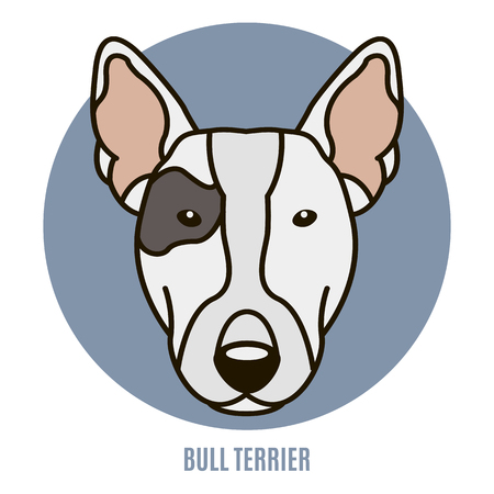 Portrait of Bull Terrier. Vector illustration in style of flat Illustration