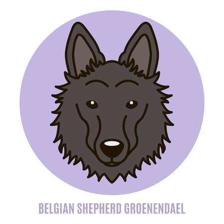 Portrait of Belgian Shepherd Groenendael. Vector illustration in style of flat Illustration