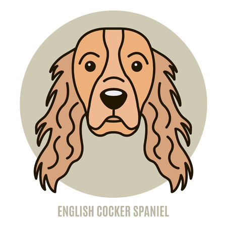 Portrait of English Cocker Spaniel isolated on a white background. Illustration