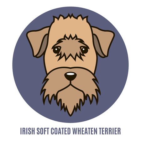 Portrait of Irish Soft Coated Wheaten Terrier isolated on a white background. Style of flat