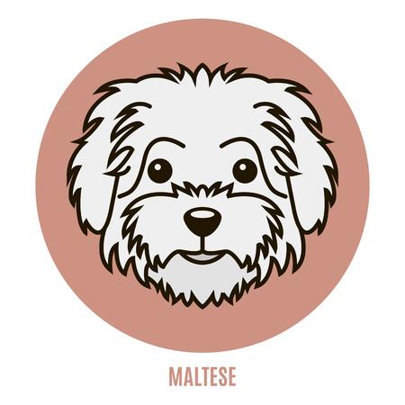 Retrato de maltés. Ilustración de vector de estilo plano
