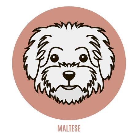 Portrait of Maltese. Vector illustration in style of flat