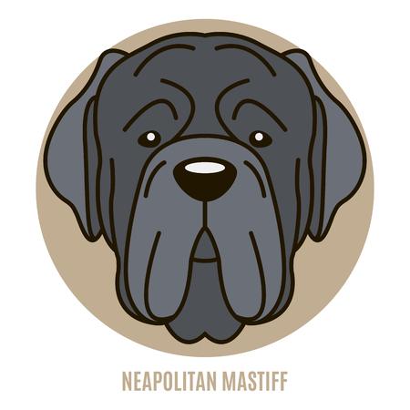 Portrait of Neapolitan Mastiff. Vector illustration in style of flat 일러스트