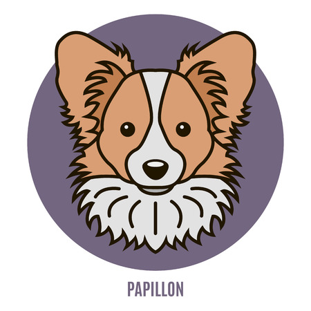 Portrait of Papillon. Vector illustration in style of flat
