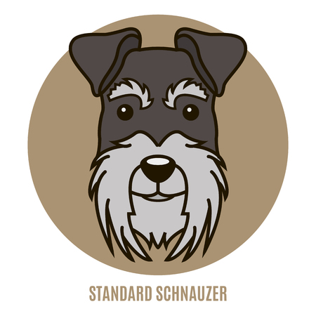 Portrait of Standard Schnauzer. Vector illustration in style of flat