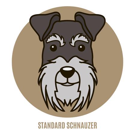 Portrait of Standard Schnauzer. Vector illustration in style of flat Illustration