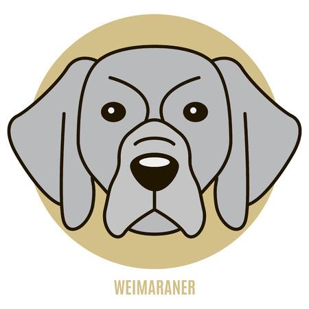 Portrait of Weimaraner. Vector illustration in style of flat