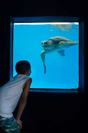 Children looking at large turtles in a large aquarium - turtle poses for photo.