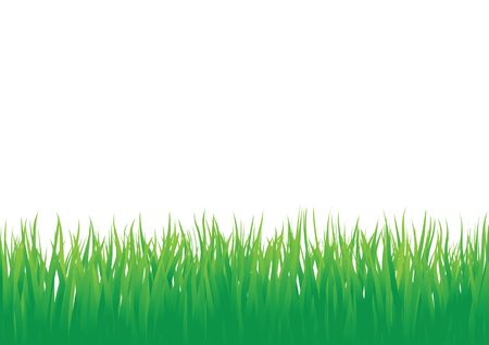Green grass isolated on the white background Stock Vector - 6744418