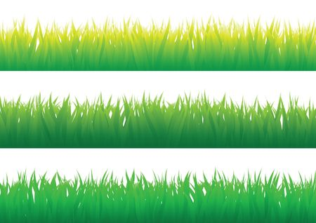 Green grass isolated on the white background Vector