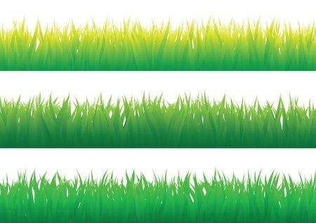 Herbe verte isolé sur le fond blanc