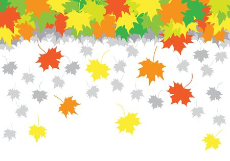 falling maple leaves on the white background Vector