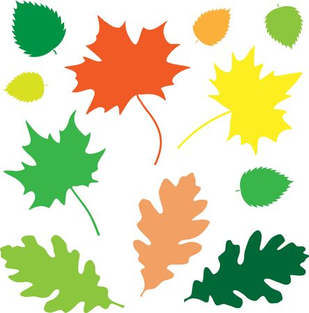 Oak and maple leaves on the white background
