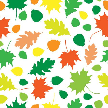 Beautiful autumn oak and maple leaves texture on white background Vector