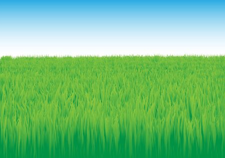 Green grass field with blue and white sky Stock Photo - 6744542